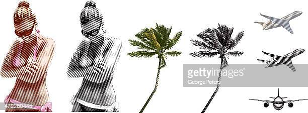 tropical beach vacation design elements - coconut palm tree stock illustrations, clip art, cartoons, & icons