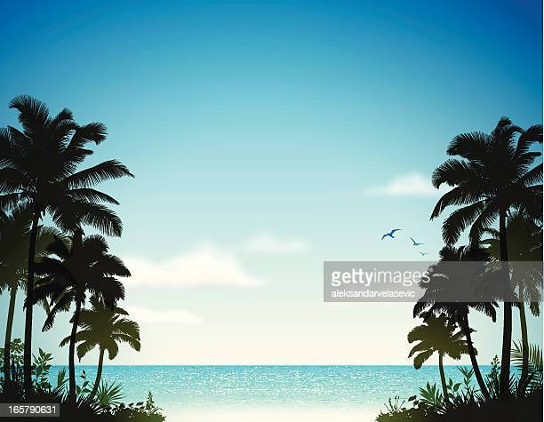 tropical beach with palm trees - coconut leaf stock illustrations, clip art, cartoons, & icons