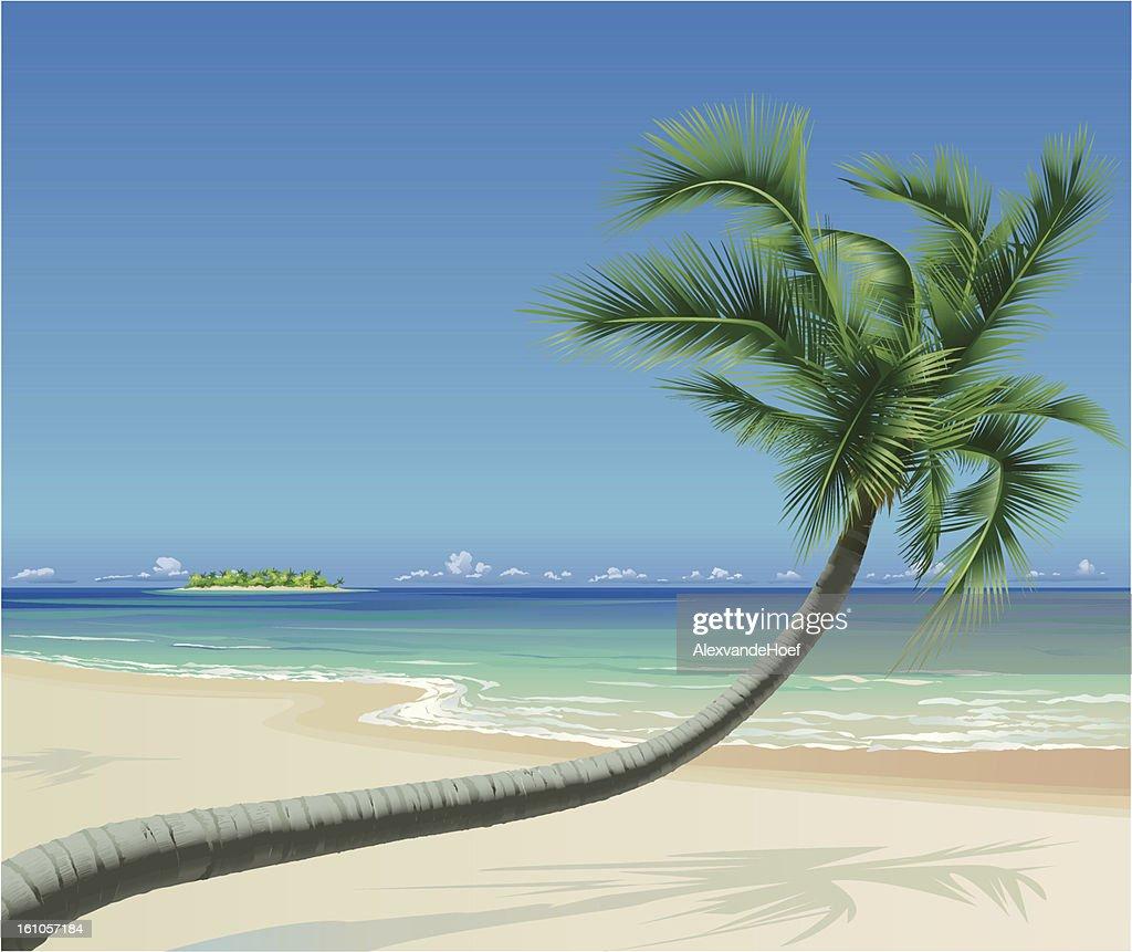 Tropical Beach with Palmtree : Vector Art
