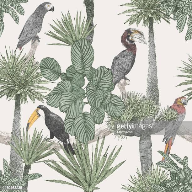 illustrations, cliparts, dessins animés et icônes de oiseaux tropicaux et palmiers répéter - forêt pluviale