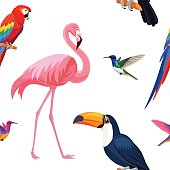 Tropical birds pattern. Vector seamless texture.