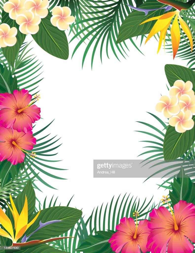 Tropical Border