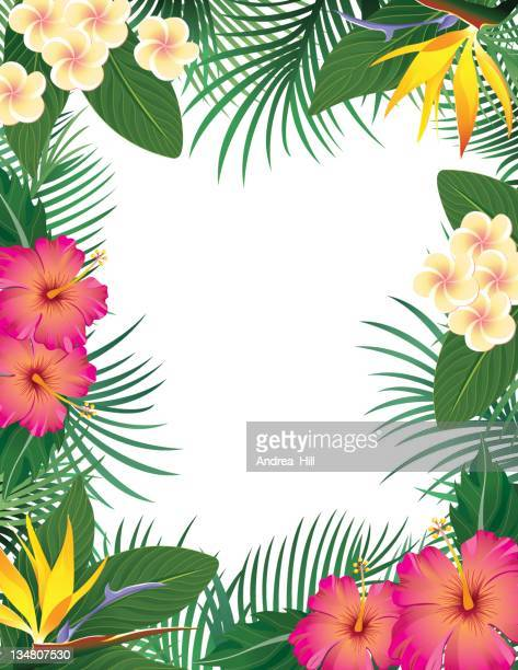 tropical border - coconut leaf stock illustrations, clip art, cartoons, & icons