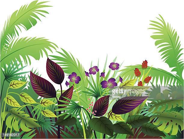 bildbanksillustrationer, clip art samt tecknat material och ikoner med tropical border with maroon - flowerbed