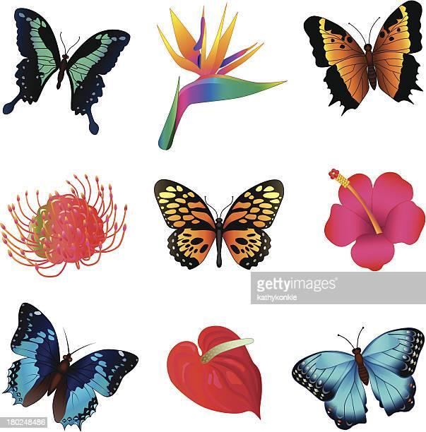 tropical butterflies and flowers