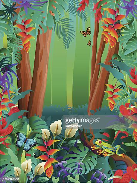 tropical butterflies and tree frog in the rainforest