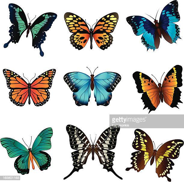 ilustrações, clipart, desenhos animados e ícones de borboletas tropicais - lepidóptero
