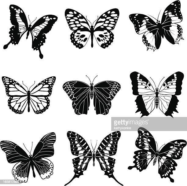 ilustrações, clipart, desenhos animados e ícones de borboletas tropicais - borboleta