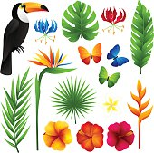 Tropical design elements.