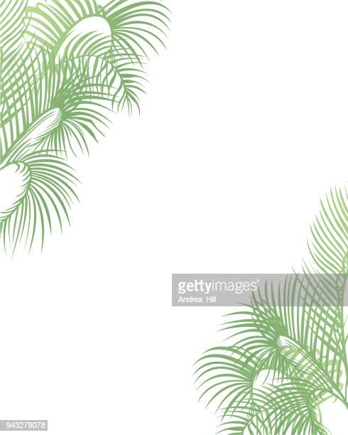 tropical design template or border with palm leaves - palmetto florida stock illustrations