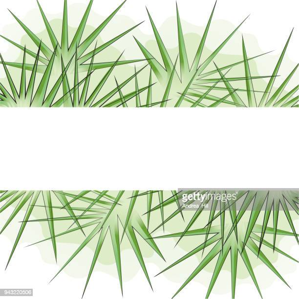 tropical design template or border with palm tre leaves - palmetto florida stock illustrations