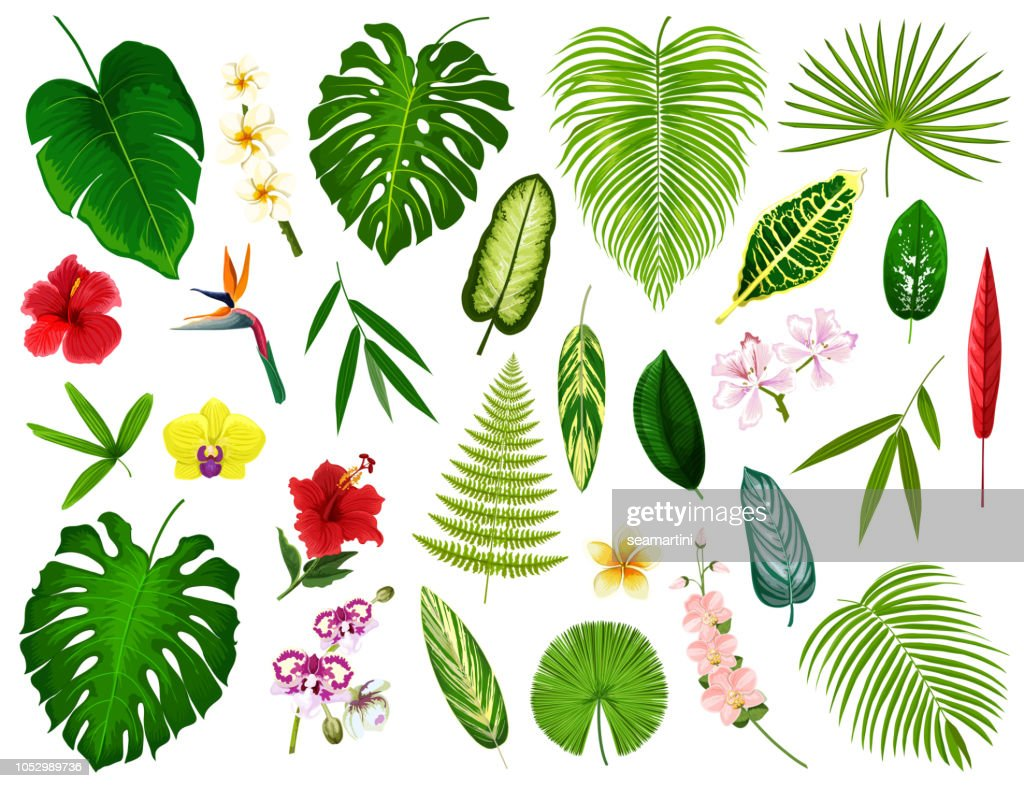 Tropical exotic plants and flowers leaf, vector