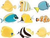 Tropical fish / Poissons tropicaux