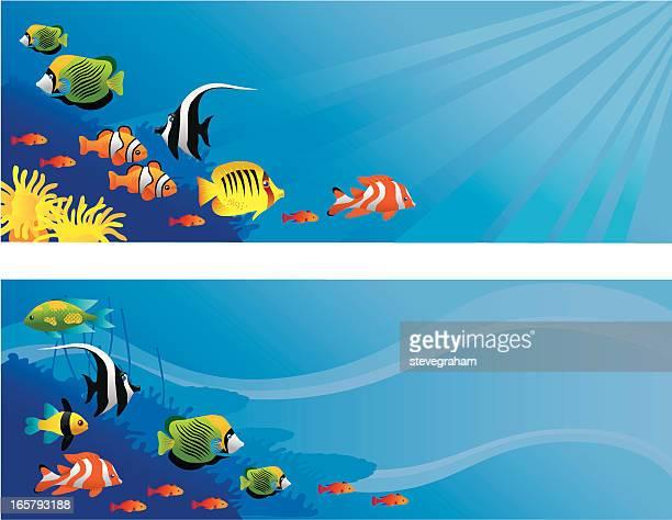tropical fish scenes - angelfish stock illustrations, clip art, cartoons, & icons
