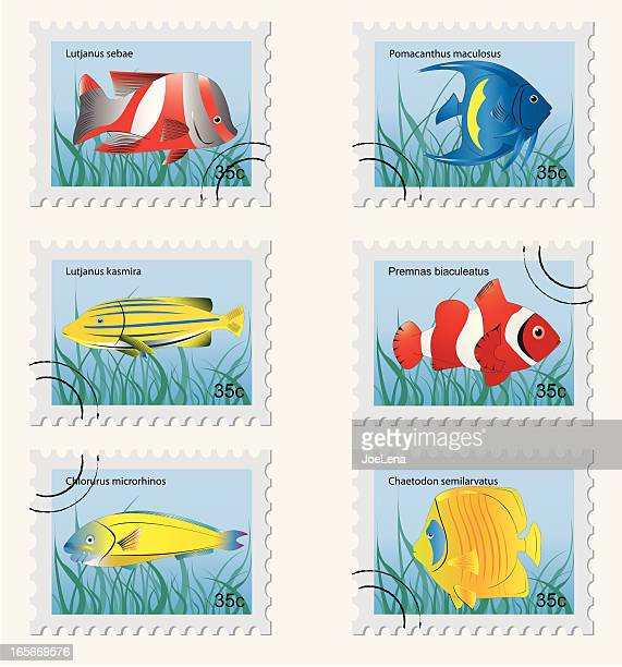 tropical fish stamps - angelfish stock illustrations, clip art, cartoons, & icons