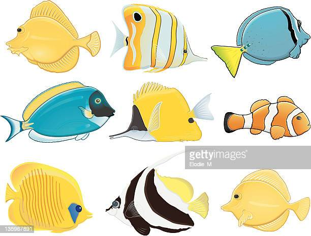 tropical fish / poissons tropicaux - acanthuridae stock illustrations, clip art, cartoons, & icons