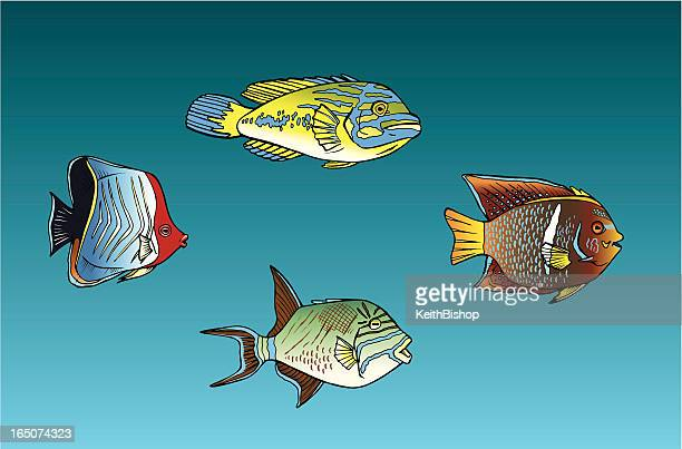 tropical fish - animal spine stock illustrations, clip art, cartoons, & icons