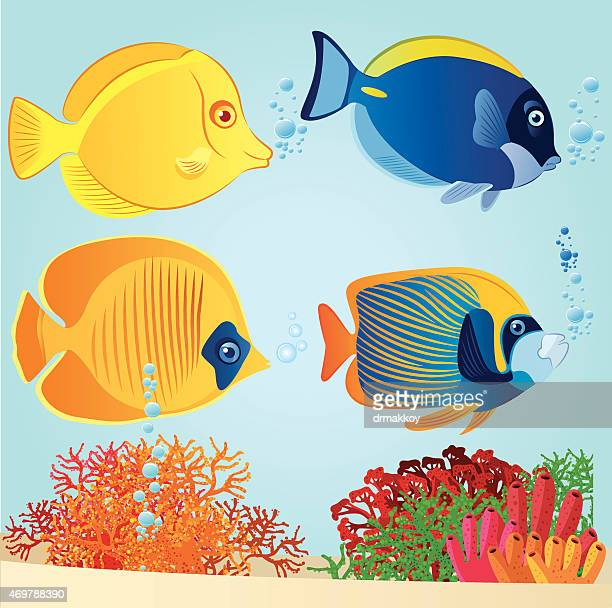 tropical fish - acanthuridae stock illustrations, clip art, cartoons, & icons