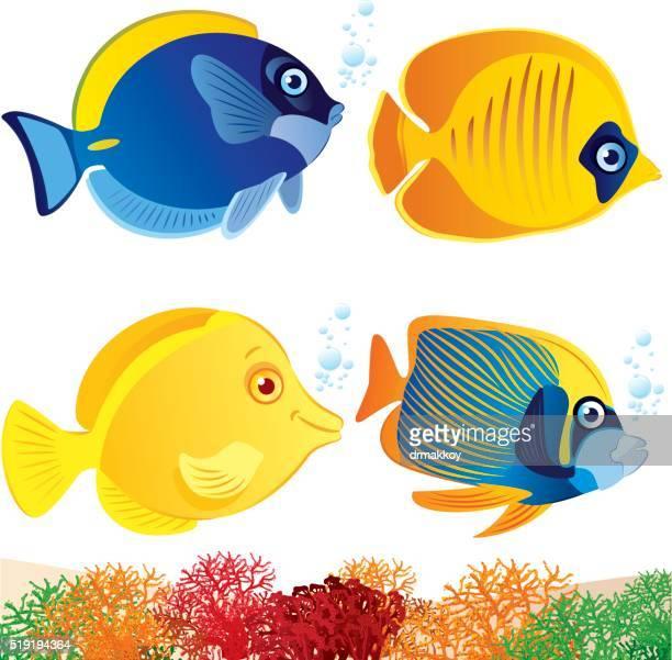 tropical fish - angelfish stock illustrations, clip art, cartoons, & icons