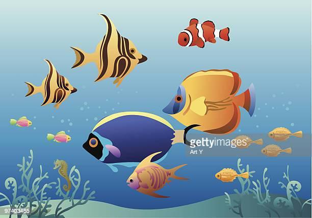 tropical fish - anemonefish stock illustrations, clip art, cartoons, & icons