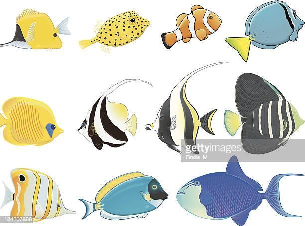 Tropical fishes / Poissons tropicaux
