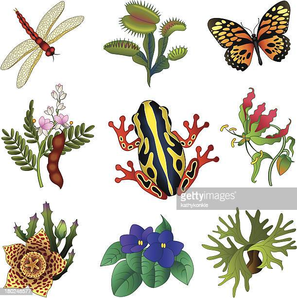 tropical flora and fauna - venus flytrap stock illustrations, clip art, cartoons, & icons