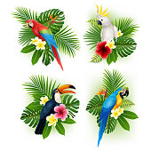 Tropical flower and bird collection set