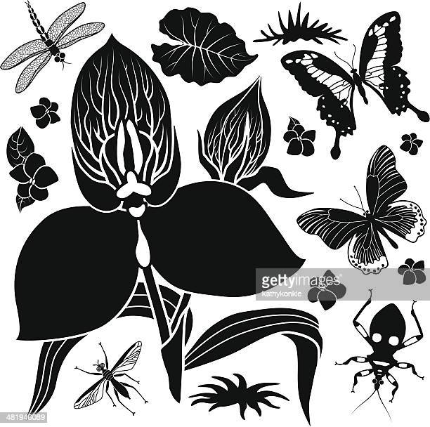 tropical flowers and insects - assassin bug stock illustrations, clip art, cartoons, & icons