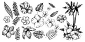 Tropical flowers and palm trees. Outline. Vector set