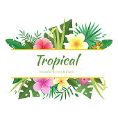 Tropical flowers and plants bouquet vector frame.