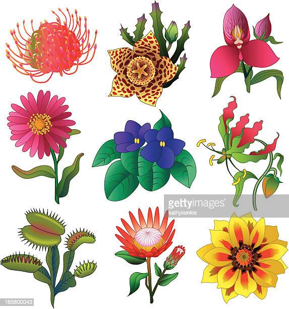tropical flowers - venus flytrap stock illustrations, clip art, cartoons, & icons
