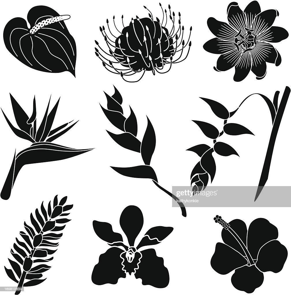 Tropischen Blumen Stock-Illustration - Getty Images