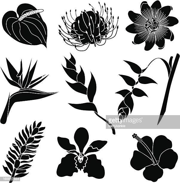 Passion Flower Stock Illustrations And Cartoons