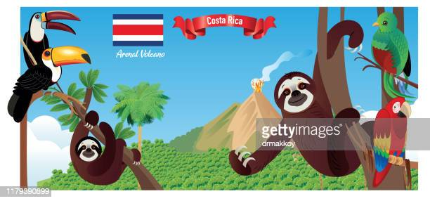 tropical forest, and  arenal volcano - stratovolcano stock illustrations, clip art, cartoons, & icons