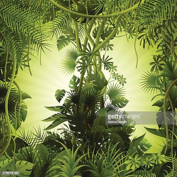 tropical forest background - vine stock illustrations