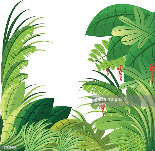 tropical forest - costa rica stock illustrations, clip art, cartoons, & icons