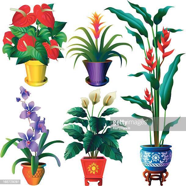 illustrations, cliparts, dessins animés et icônes de plantes tropicales house - plante verte