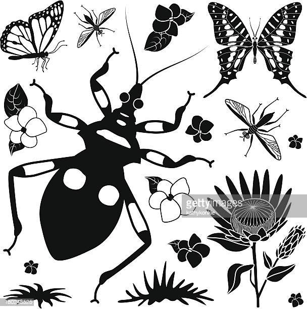 tropical insects design elements - assassin bug stock illustrations, clip art, cartoons, & icons