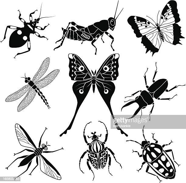 tropical insects - assassin bug stock illustrations, clip art, cartoons, & icons