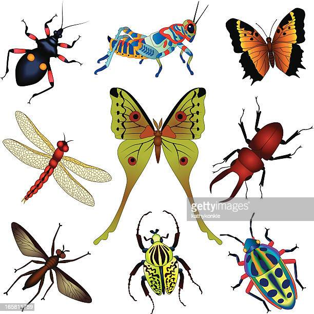 tropical insects