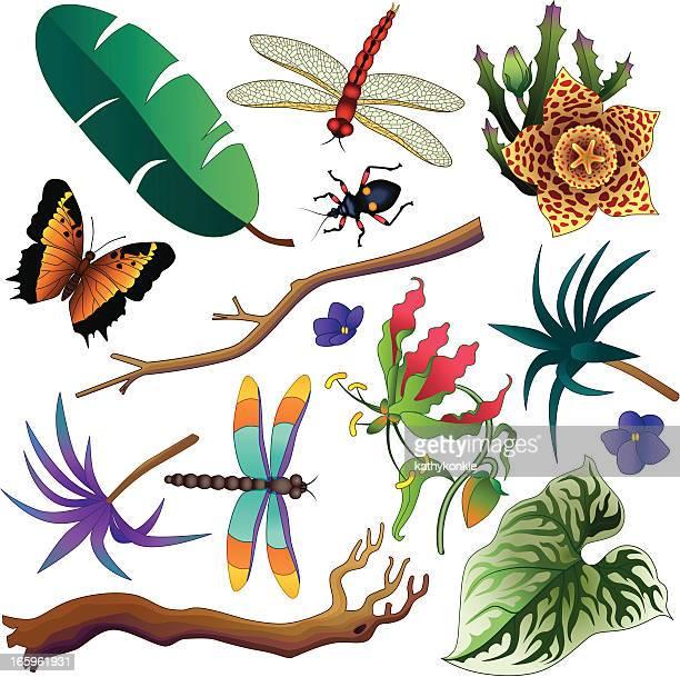 tropical jungle design elements - assassin bug stock illustrations, clip art, cartoons, & icons