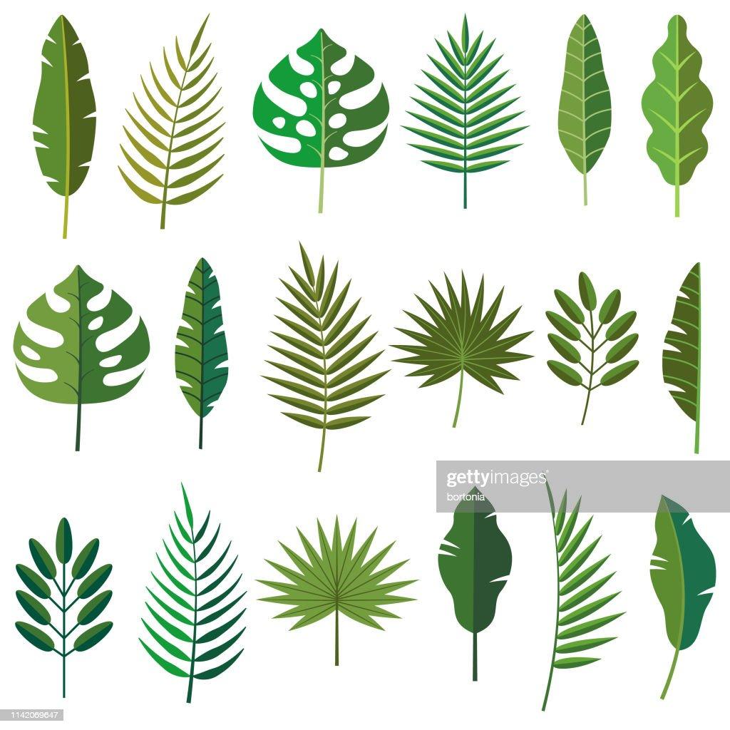 Icone foglia tropicale : Illustrazione stock
