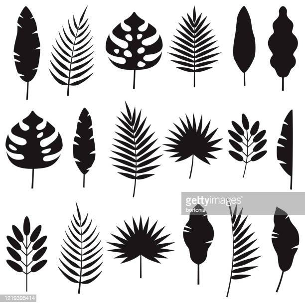 illustrations, cliparts, dessins animés et icônes de ensemble de silhouettes de feuilles tropicales - plante verte