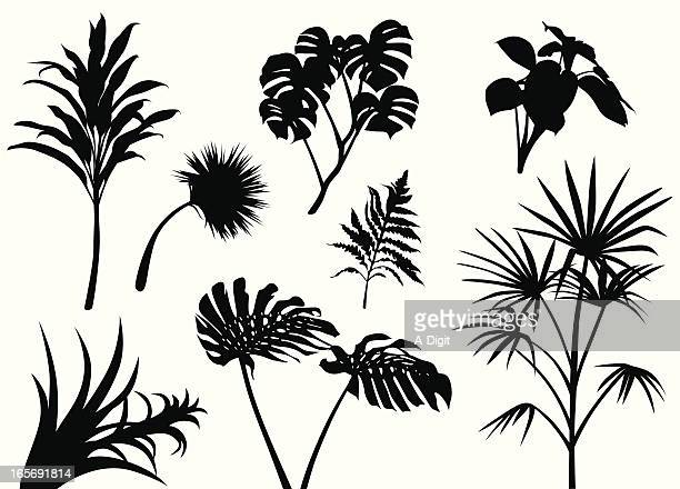 tropical leafs vector silhouette - tropical bush stock illustrations
