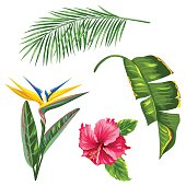 Tropical leaves and flowers set. Palms branches, bird of paradise