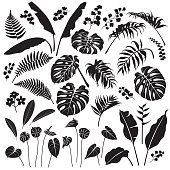 Tropical Leaves and Flowers Silhouette Set