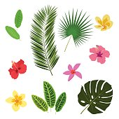 Tropical leaves and flowers, summer elements for your design, banner, flyer, poster, etc.