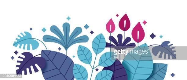 illustrations, cliparts, dessins animés et icônes de feuilles et plantes tropicales - tropical