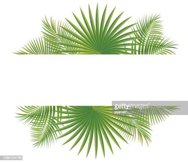 illustrations, cliparts, dessins animés et icônes de bordure de feuilles tropicales - feuille de palmier