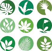 Tropical leaves on green circles. Natural icon.